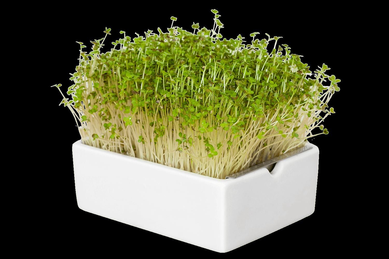 Microgreens von Heimgart