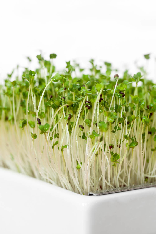 Bio-Keimlinge von Heimgart - Microgreens