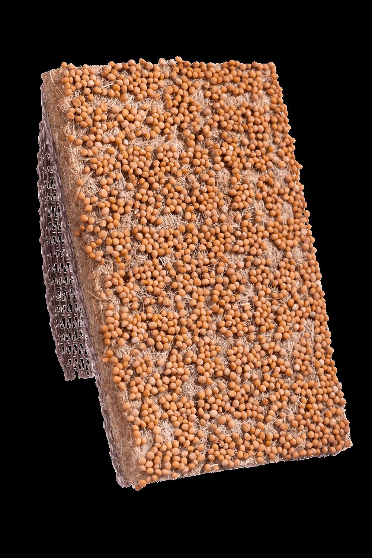 Senf Saatband von Heimgart