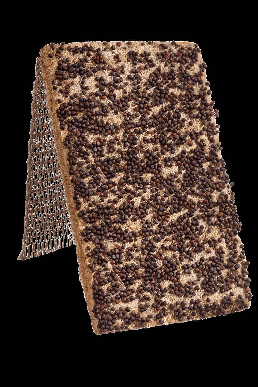 Rotkohl Saatband von Heimgart