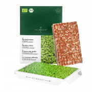 Microgreens Gartenkresse Keimlinge Saatpad