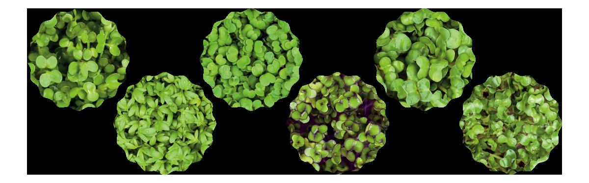 Microgreens Mixtüte von Heimgart