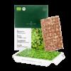 Microgreens Radieschen Keimlinge Saatpad