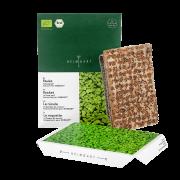 Microgreens Rauke Keimlinge Saatpad