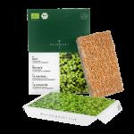 Mustard microgreens seed pads