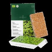 Microgreens Senf Keimlinge Saatpad