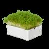 Heimgart Microgreens Starterkit mit Keimschale und BIO-Saatgut