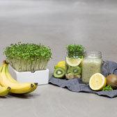 smoothie mit heimgart microgreens