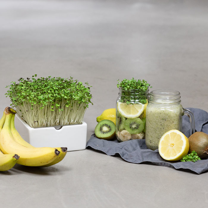 smoothie rauke microgreens