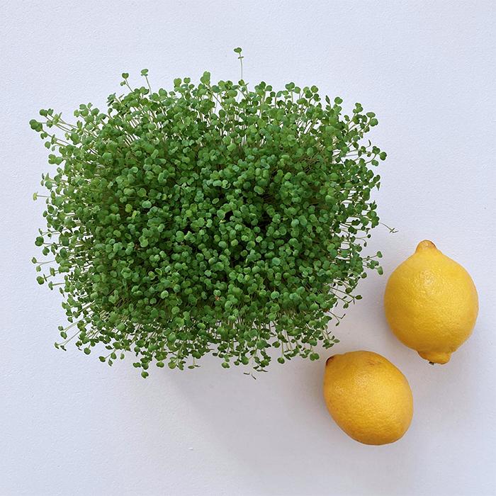 heimgart vitamin c